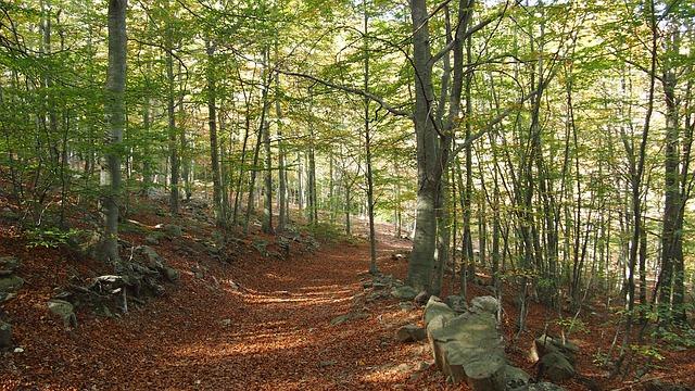 秋のお山登り~注意と対処法~