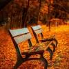 【秋の行楽】金色の稲穂にたたずむ彼岸花…綺麗な花には死に至る毒。