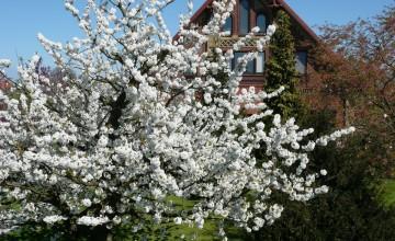 【皆来文書】かんたん美味しい!お花見にぴったりな桜色のはんぺんの明太マヨチーズ焼き♪