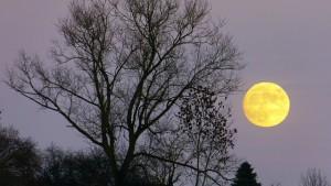 【スーパームーン】2015年最大の満月到来!中秋の名月と二日連続でお月見を♪